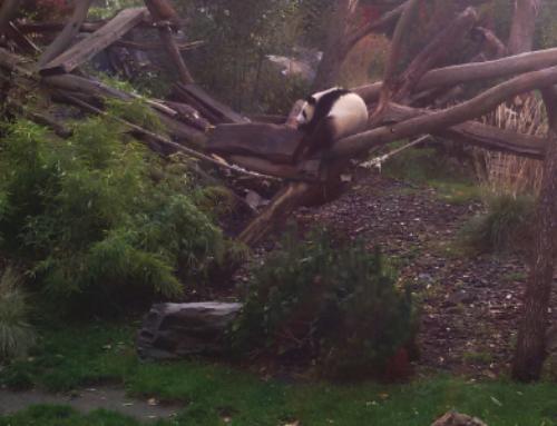 Besuch bei Panda, Zebra, Clownfisch und co.